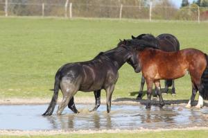 Wasserspaß auf der Koppel, Foto: Katrin Riegel
